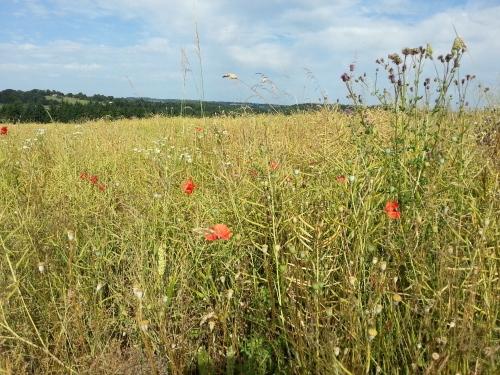 Glasshampton meadow